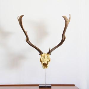 dear skull on stand